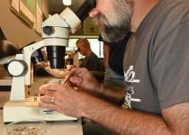 Professor Steven Wallace examines microfossils through a lab microscope